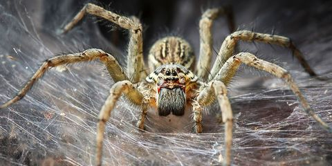 spiders eat more meat than humans