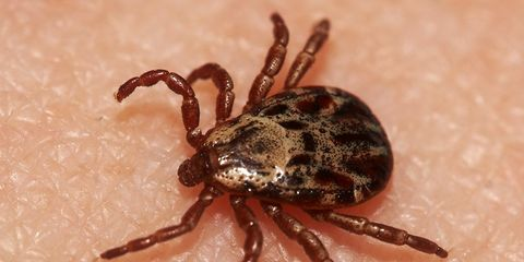 Spray clothes with permethrin to kill ticks