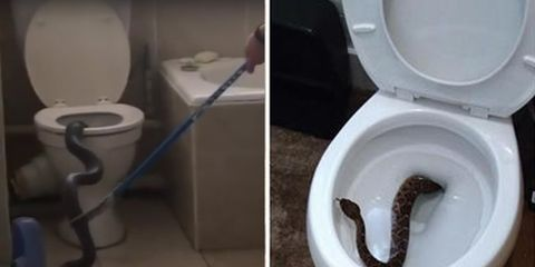 5 Terrifying Stories of Snakes Showing Up in People's Toilets