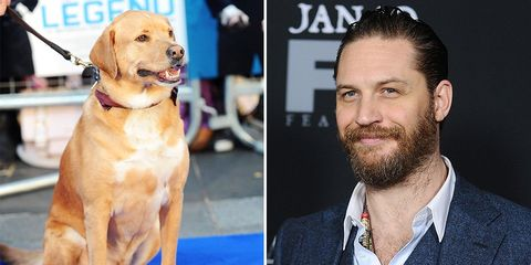 tom hardy letter to his dog