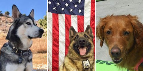 Men's Health Ultimate Dog Search Top 10