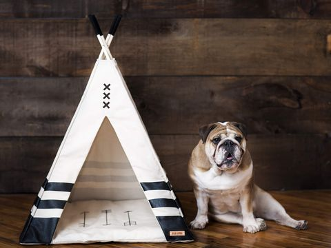 Así decoramos el rincón de tu mascota