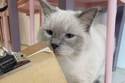 宜蘭羅東貓的生活提案