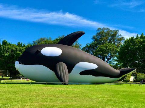 台南安平虎鯨 orca go 億載金城