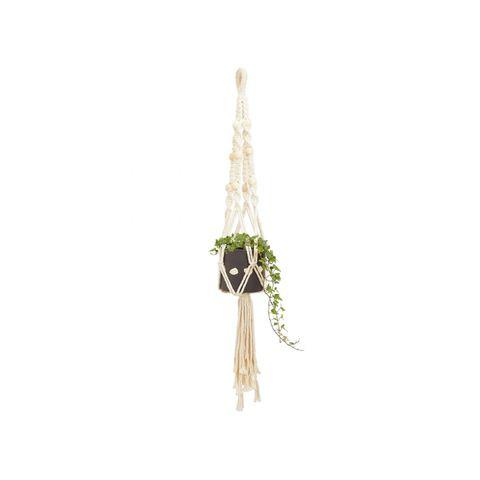 Plant, Beige, Earrings, Fashion accessory, Jewellery,