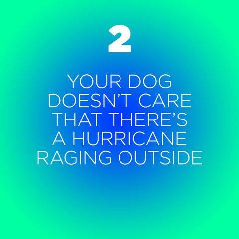 things you learn when owning a dog