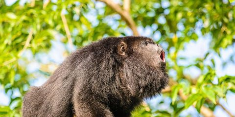 Vegetation, Nature, Branch, Organism, Natural environment, Primate, Vertebrate, Terrestrial animal, Nature reserve, Adaptation,