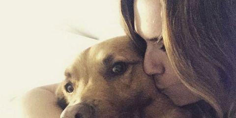 Dog breed, Skin, Dog, Mammal, Comfort, Carnivore, Interaction, Love, Snout, Friendship,