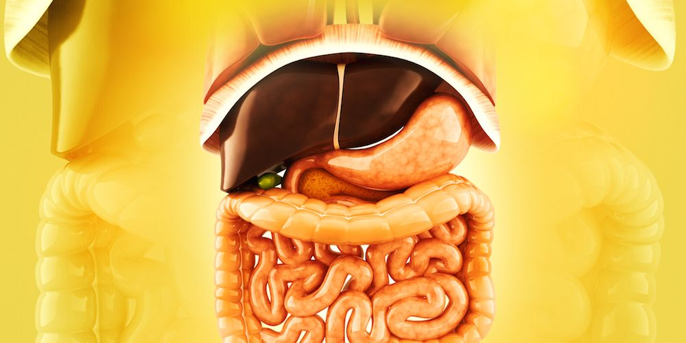 spleen and the rest of the digestive system