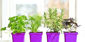 diy herb garden how to grow indoors