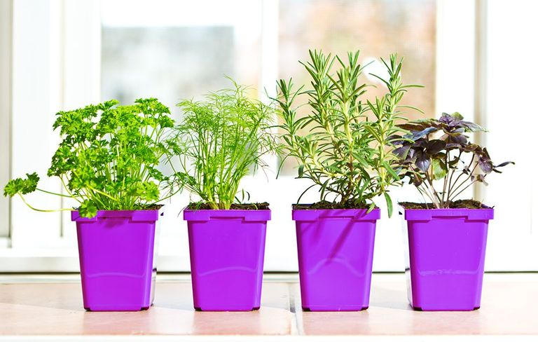 How to grow herbs indoors womens health diy herb garden how to grow indoors workwithnaturefo