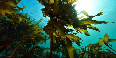 benefits of eating seaweed