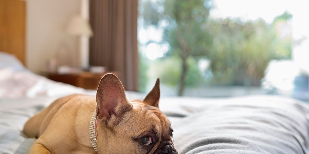 5 Women Share The Hilarious Ways Their Dogs Have Screwed -4619