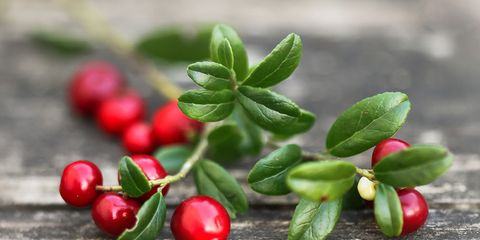 Cranberry nutrition and how to use