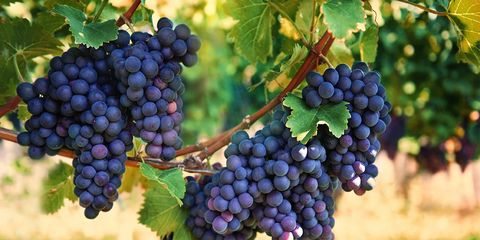 Calories in grapes and other grape facts