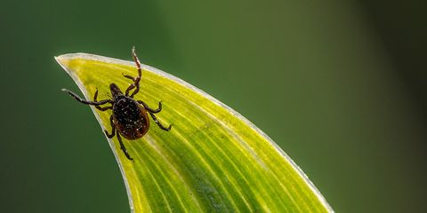 tick bite what to do