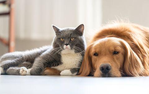 Ikea For Pets Women S Health