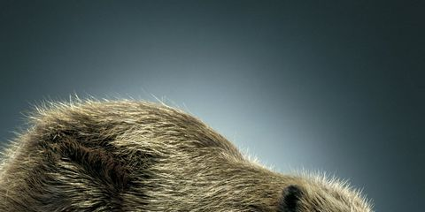Sex Health: Nice Beaver