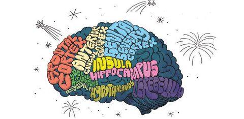 Your Brain on an Orgasm
