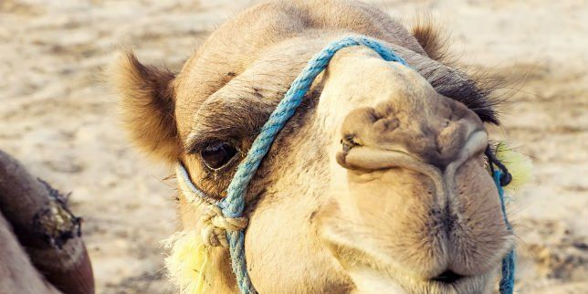 How to Never, EVER Get Caught with a Camel Toe | Women's ...