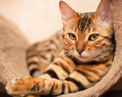 9 Beauty Lessons I Learned from My Cat