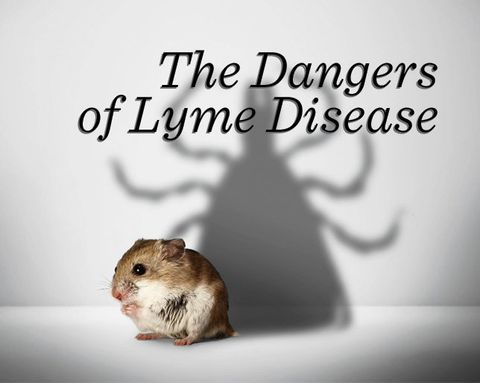 The Untold Dangers of Lyme Disease