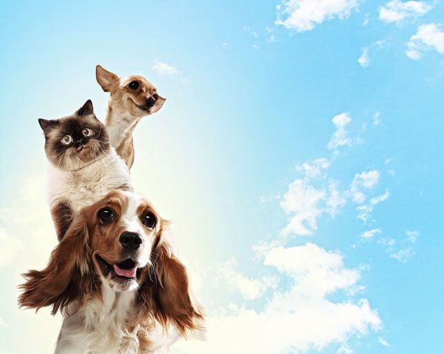 pet therapy 5 healthy reasons to have a pet