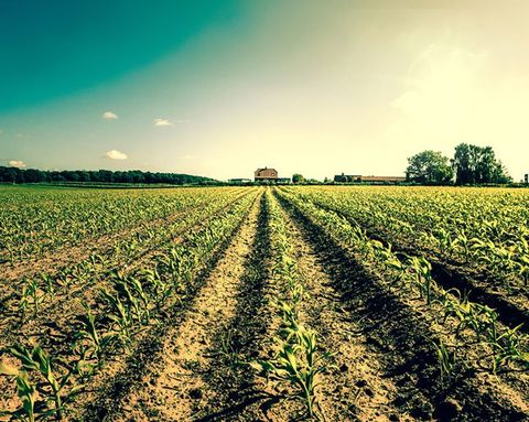 Are Your Favorite Foods Destroying the Earth?