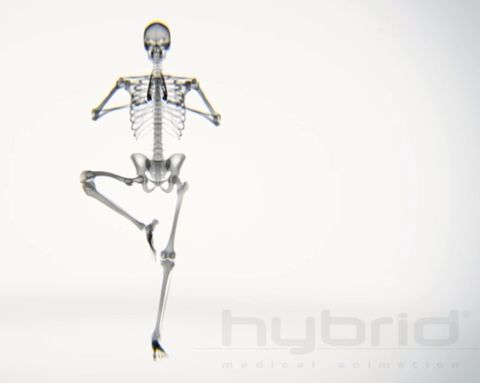 Your Body on Yoga: An X-Ray Look at the Bones Mid-Downward Dog