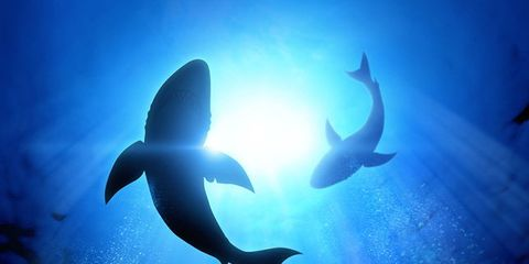shark-attacks.jpg