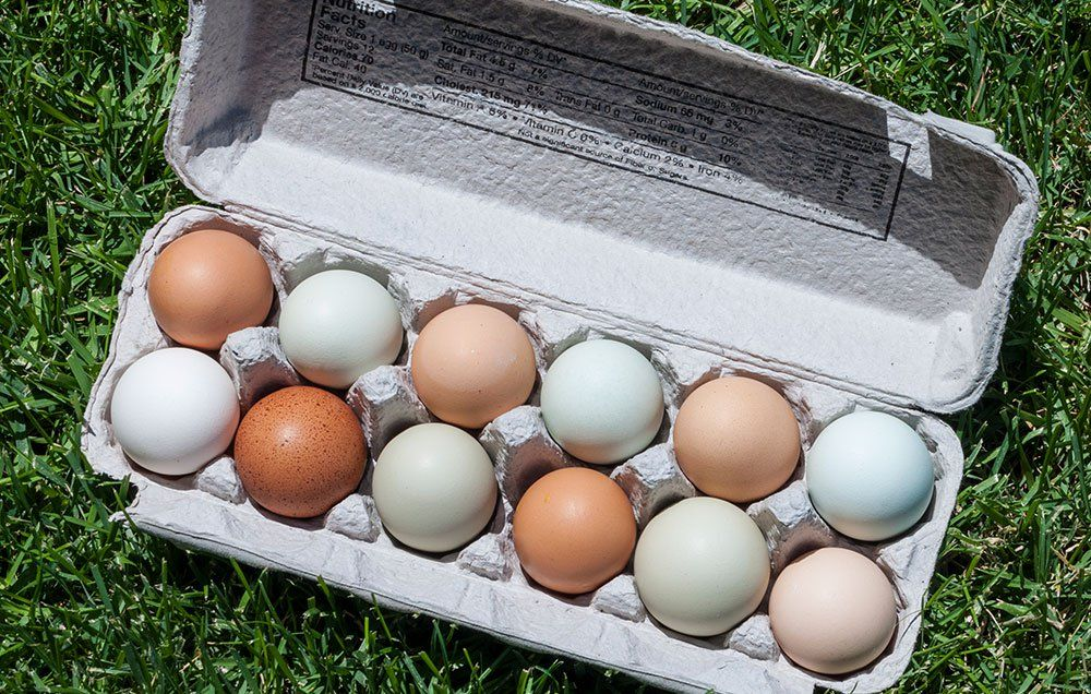 Does It Really Matter What Kind Of Eggs You Buy?
