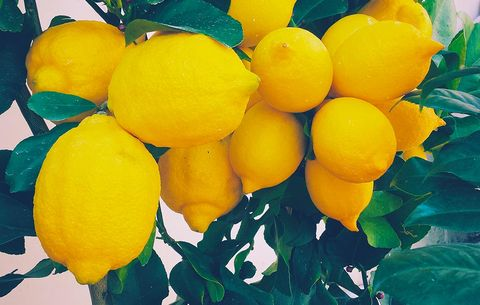 What You Need to Know if You're Drinking Lemon Water for Weight Loss