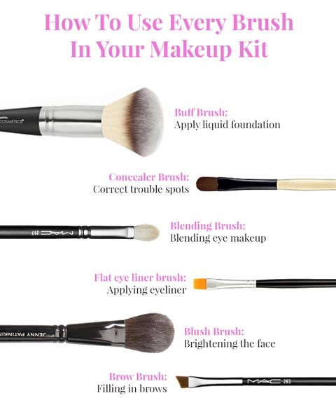 Infographic: how to use every brush in your makeup kit