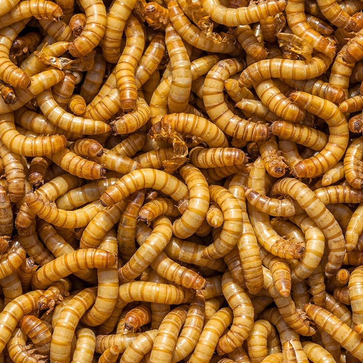 Here's How Much Mouse Poop, Maggots, and Cigarette Butts the FDA Allows in Your Food