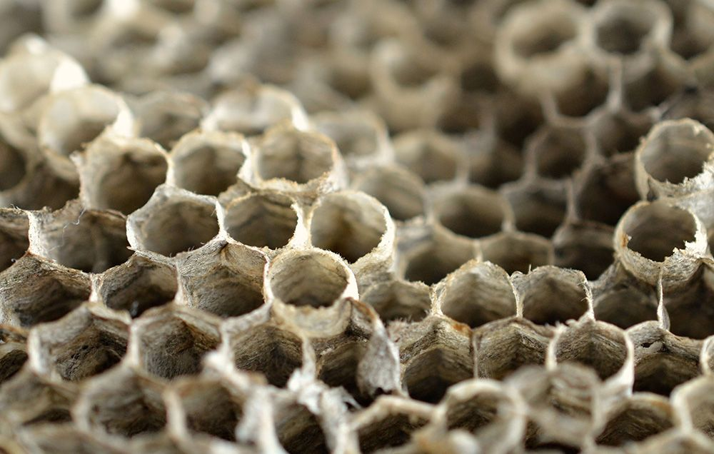 Why Are Women Putting Wasp Nests in Their Vaginas?
