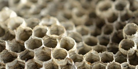 Pattern, Close-up, Design, Honeycomb, Organism, Pest, Bee, Membrane-winged insect, Insect, Photography,