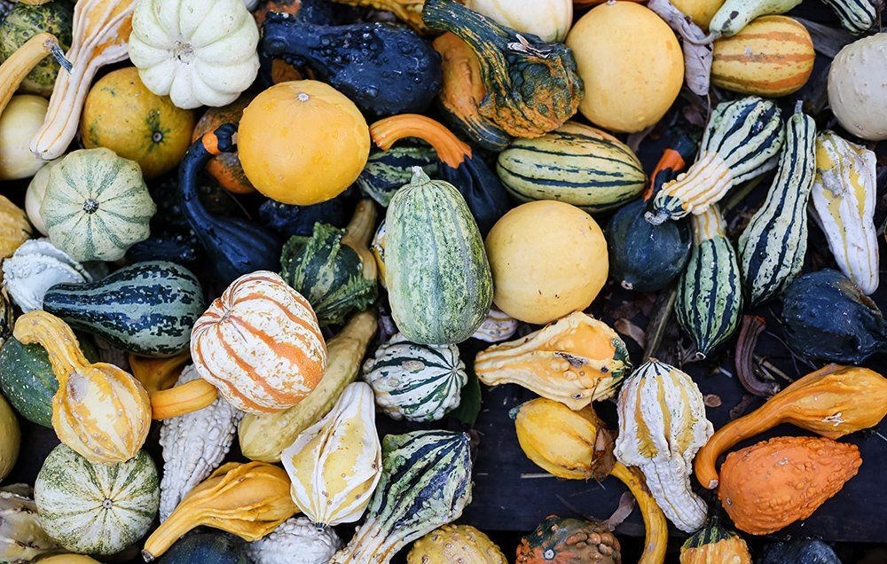 How many calories in a bowl of acorn squash