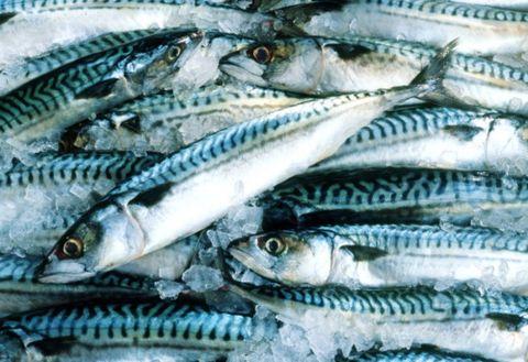 Fish, Fish, Fish products, Sardine, Oily fish, Mackerel, Herring, Atlantic spanish mackerel, Seafood, Forage fish,