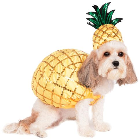 Dog, Canidae, Shih tzu, Puppy, Dog breed, Dog clothes, Lhasa apso, Fruit, Carnivore, Plant,