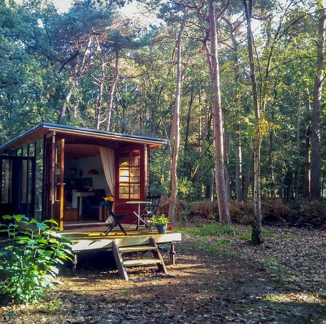 Natural landscape, Tree, Natural environment, Forest, House, Nature reserve, Home, Property, Shed, Cottage,