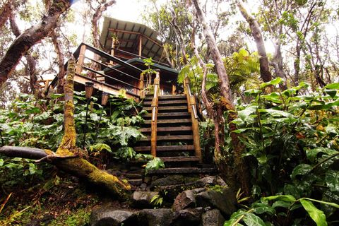 Nature, Vegetation, Jungle, Natural environment, Tree, Forest, Nature reserve, Rainforest, Stairs, Botany,