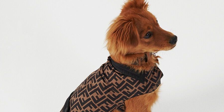 Fendi Releases a Travel Collection for Your Pet