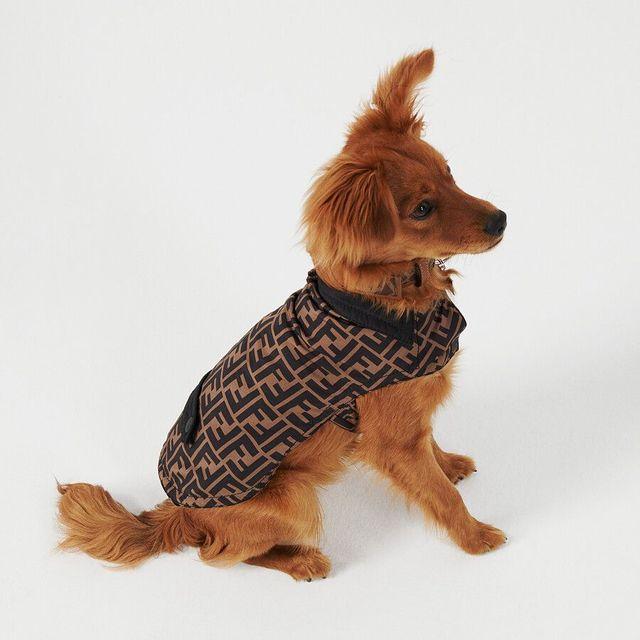 fendi, pet collection, dog collar, dog leash, dog coat, pet carrier