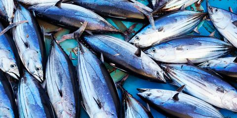 duurzame-tonijn-msc-keurmerk