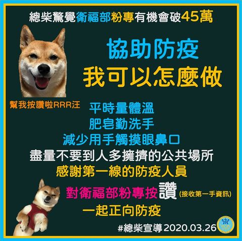 Mammal, Canidae, Dog, Carnivore, Dog breed, Shiba inu, Photo caption,
