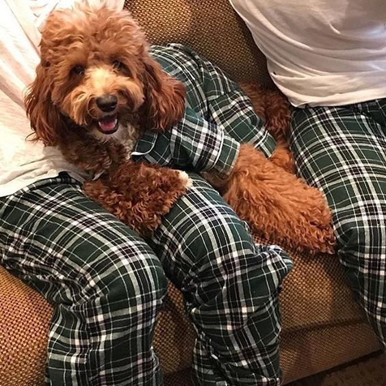 Wear Matching Pajamas With Your Dog