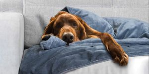 weighted blanket for dog