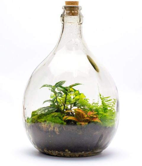 Duurzaam cadeaus roestplanten