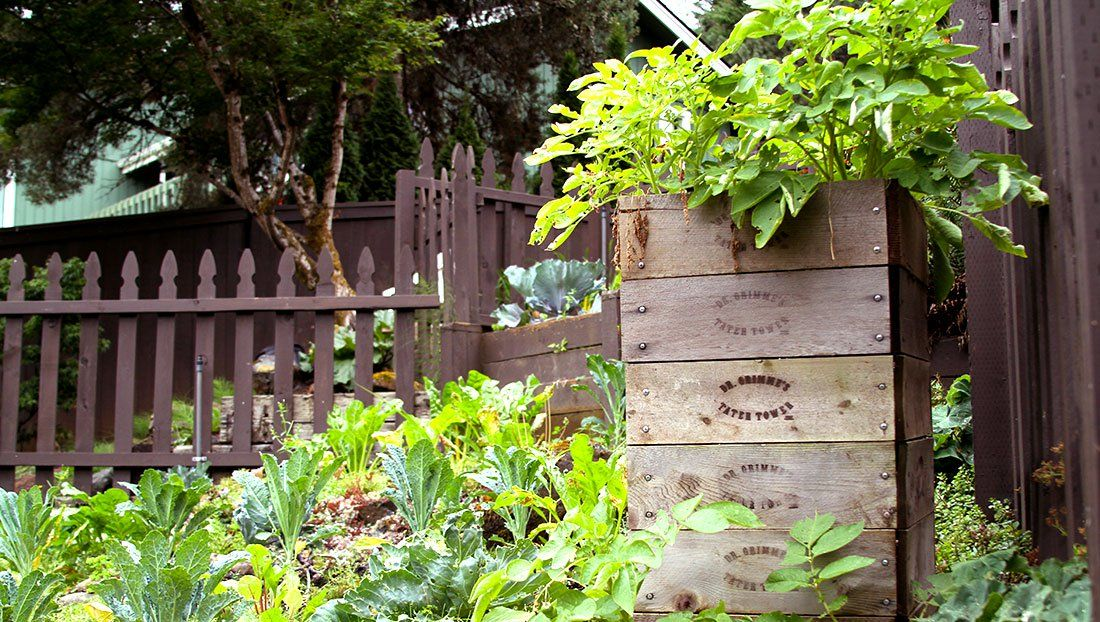 How To Grow Potatoes In Boxes Planting Potatoes In Containers