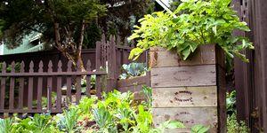 Potato Box Garden